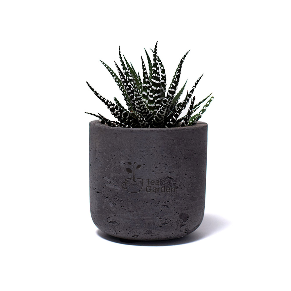 Custom Mini Wilson Potted Plant