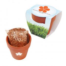 Custom Seed Sensations Terracotta Pot