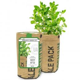 Urban Agriculture Herbs