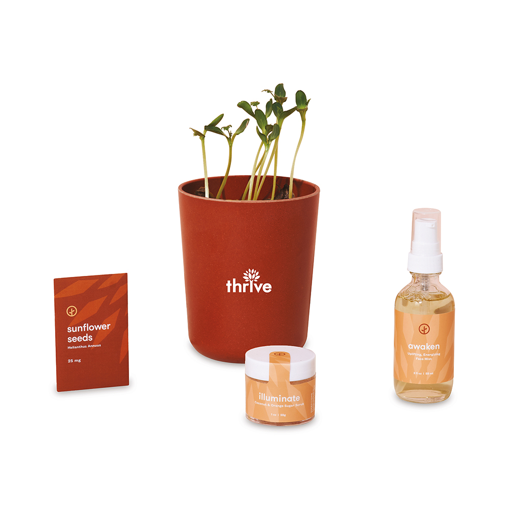 Modern Sprout® Shine Bright Custom Kit - Sunflower and Fragrant Diffuser