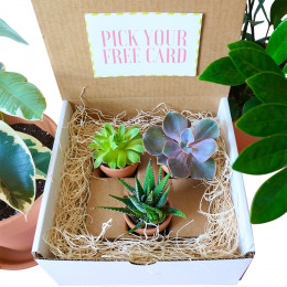The Sweet Little Plant Box