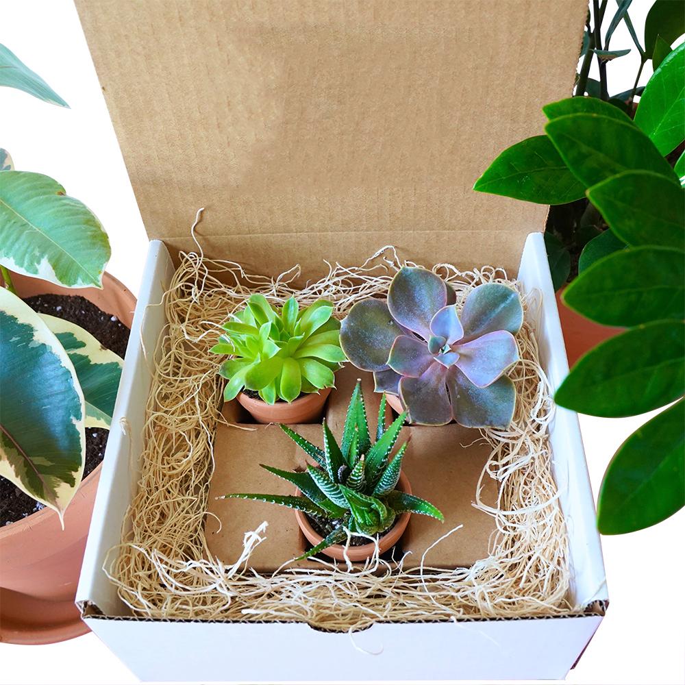 The Sweet Little Plant Box