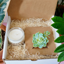 The Succulent Candle Box
