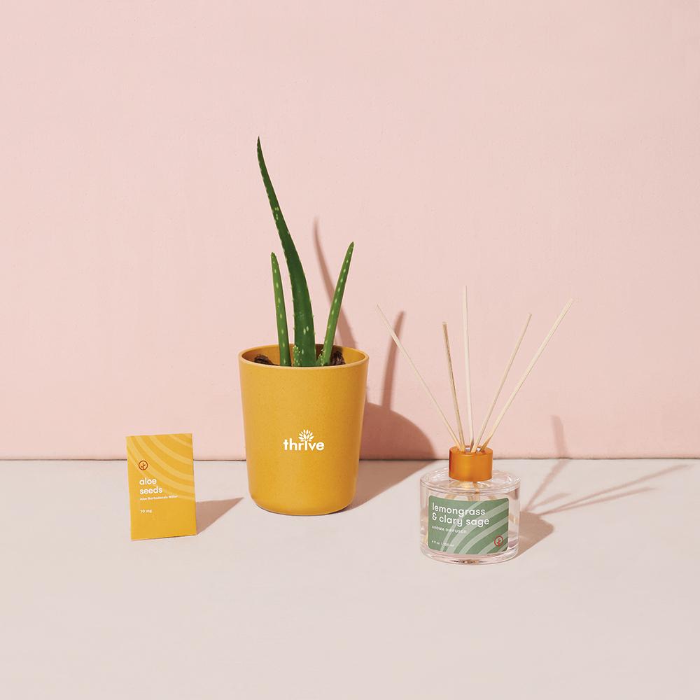 Modern Sprout® Find Balance Take Care Custom Kit - Aloe