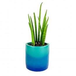 Custom Mini Color Blast Potted Plant