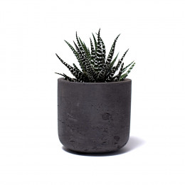 Custom Medium Wilson Potted Plant