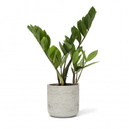 Custom Large Wilson Potted Plant